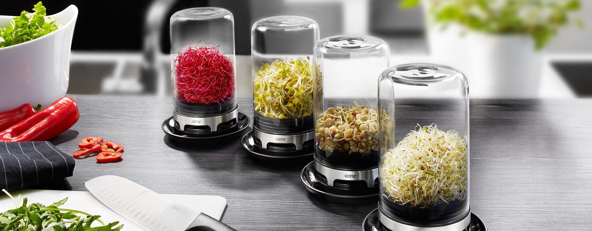 Szklarnia do kiełków do kuchni - dlaczego warto jeść kiełki?
