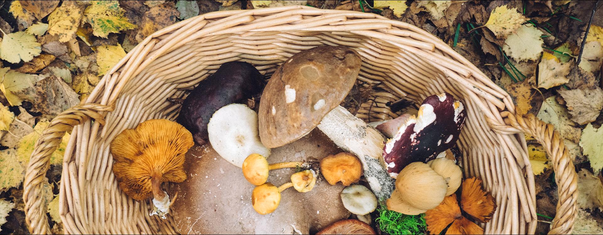 Wszystko na temat grzybobrania i suszenia grzybów